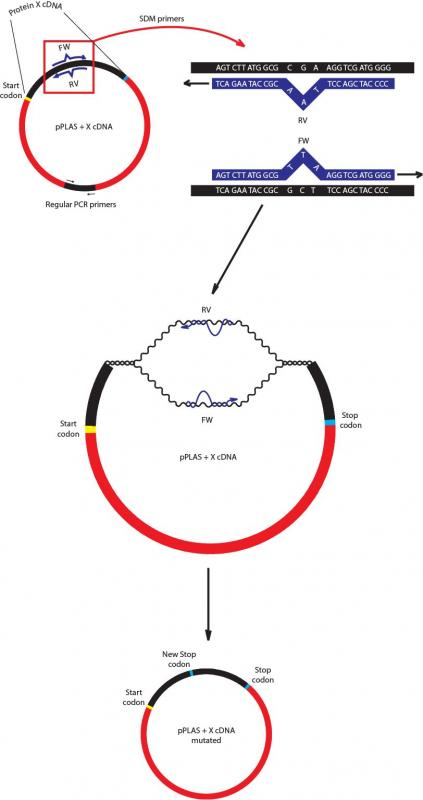 dna template strand