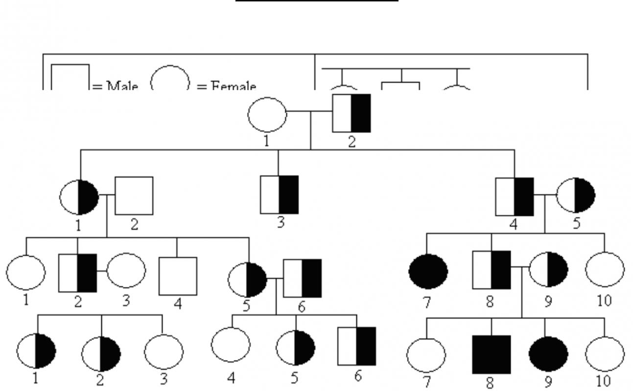 Pedigree chart template shatterlionfo pedigree chart template pooptronica Gallery